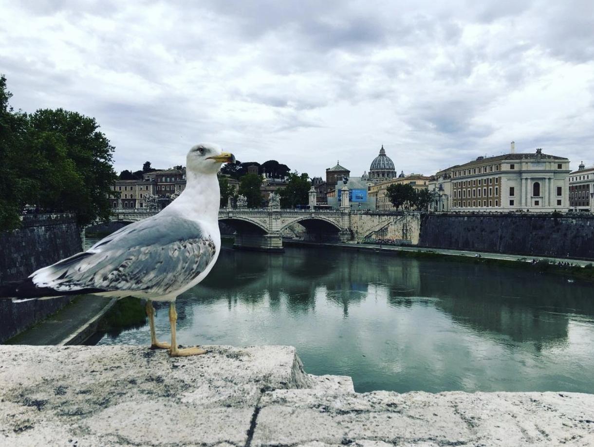 rzym i mewa