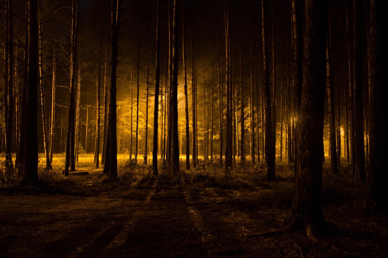 Las w Witkowicach